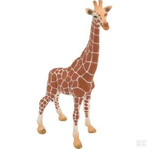 Giraffe, Kuh (14750Sch) Kramp